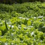 vegetables-861357_1280