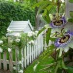 flower-215338_1280